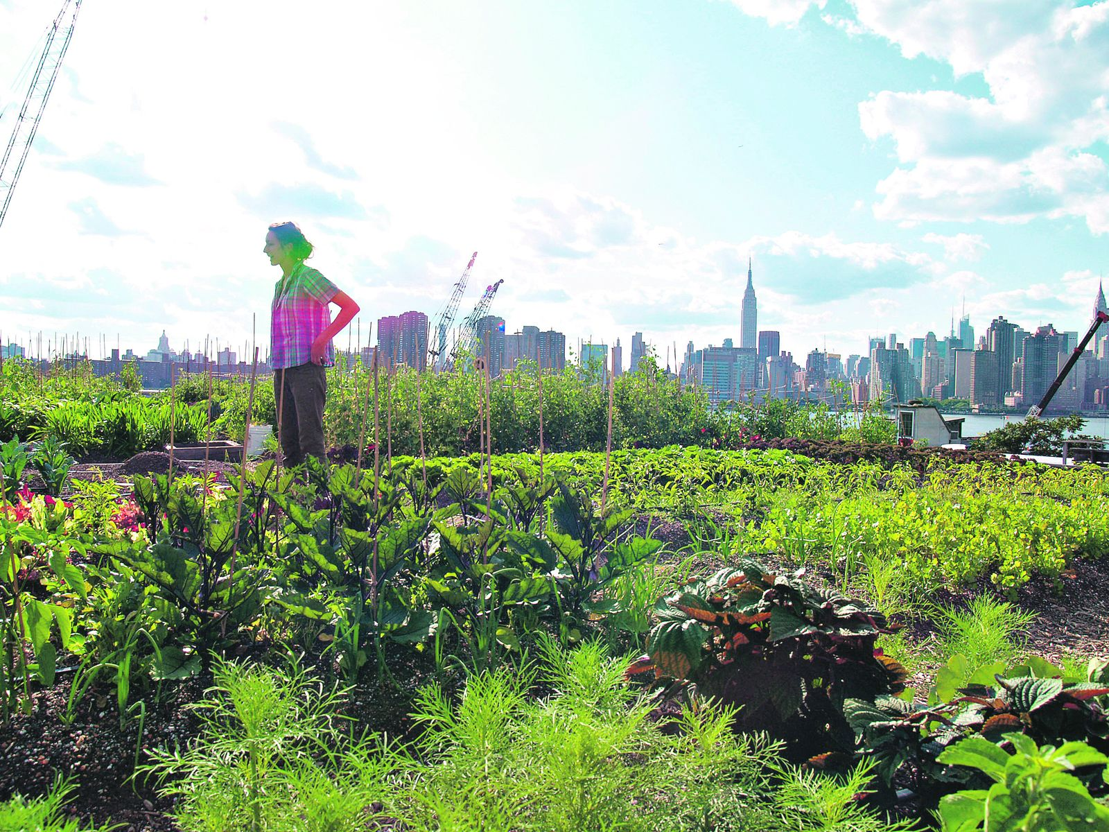 the importance of the practice of urban farming in todays world Seeing an opportunity to unite the wide-ranging efforts of urban farmers worldwide, cities magazine and trancity have published farming the city: food as a tool for.